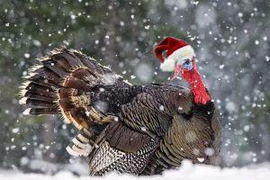 Turkey-Santa
